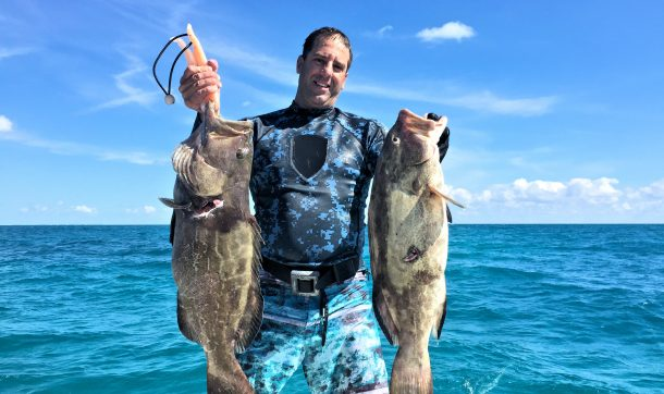 A large pair of Black Grouper speared with a friend