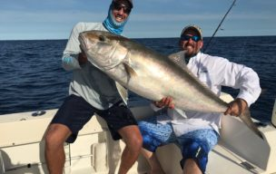 Super Sized 60lb Amberjack caught from a deep wreck.  This is the fight of anyone's life!!